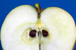 Manzana. Foto Jose M. Osoro